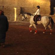 Connemara skatholm priscilla min elske pony er solgt ;-(
