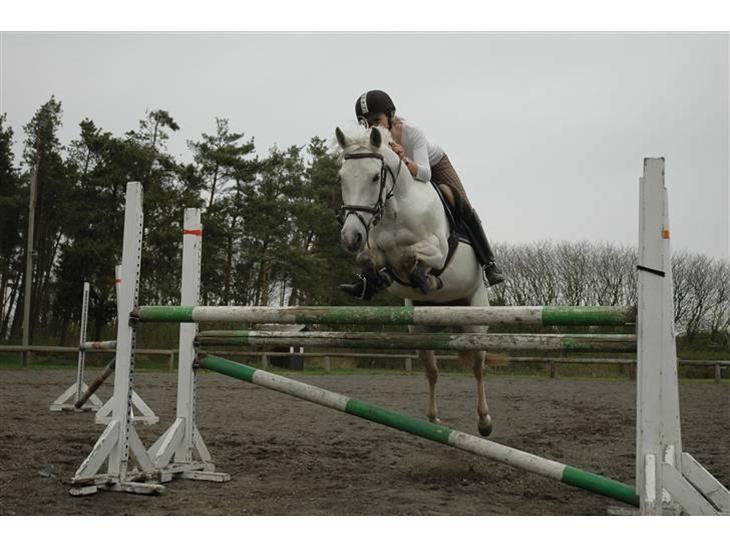 Tysk Sportspony - Halla - Jumping Flæske. Skummelt Ö