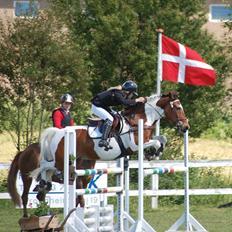 Pinto SIR PATRICK B-pony