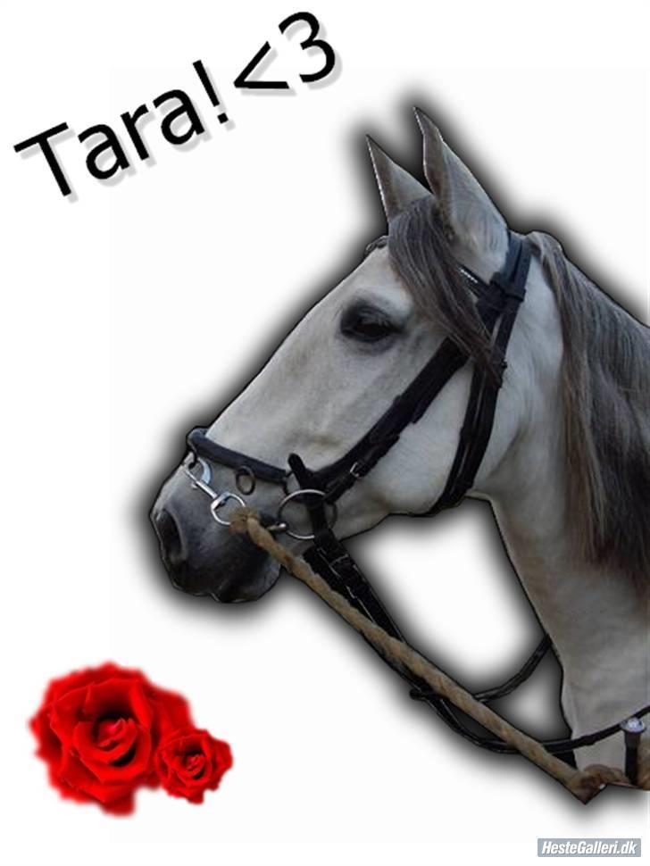 Pura Raza Española  Tara † billede 14