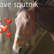 Anden særlig race Sputnik R.I.P :'(