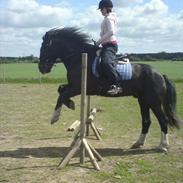 Tinker Major Mentz ( tidligere hest )