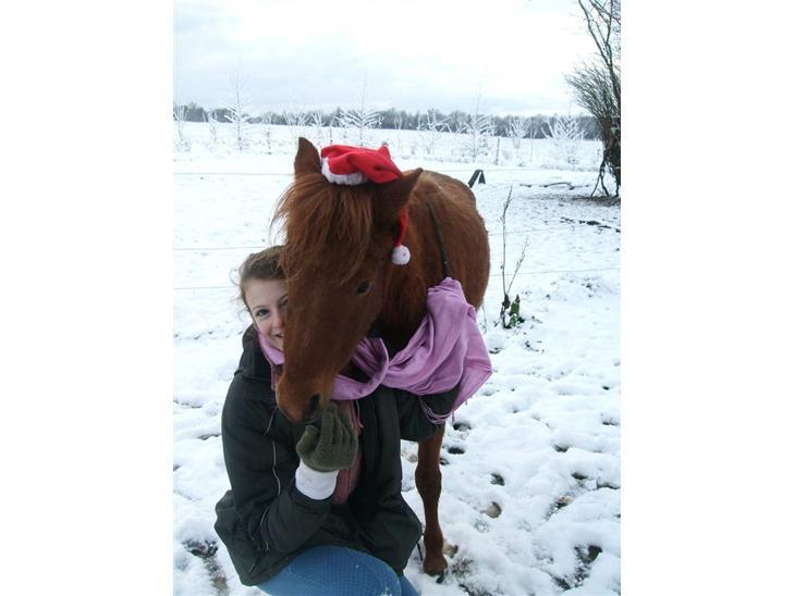 Kaspisk hest Kesari Spring - *01 - Jeg elsker dig, virkelig, og det har jeg gjort lige siden du blev født!<3