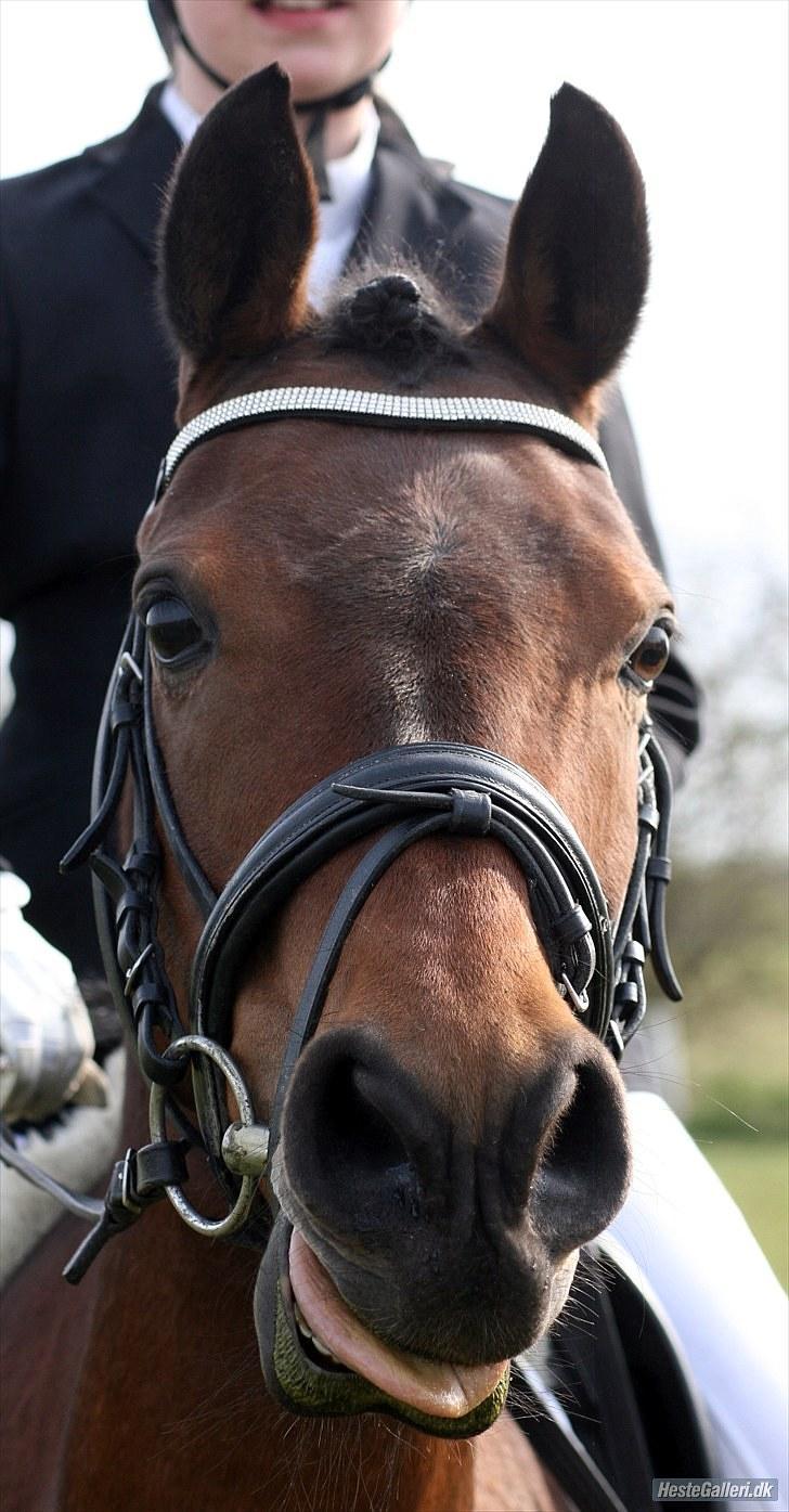 Pinto Vestergårdens Jasmin  <3 - min smukke pony :-* billede 7