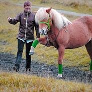 Islænder Laufa pilbrodalen