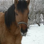 Anden særlig race Abby ;* -Venindes hest