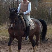Anden særlig race Monark - A-hest i dressur