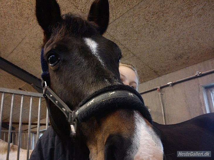 Anden særlig race Kaptana drømme hesten (solgt) - Velkommen til kaptana´s profil
