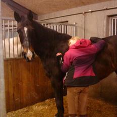Anden særlig race Kaptana drømme hesten (solgt)