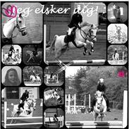 Hollandsk Sportspony *Jarka* (Jackie) Solgt:-(