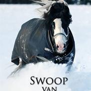 Irish Cob Swoop Van Hippolacta