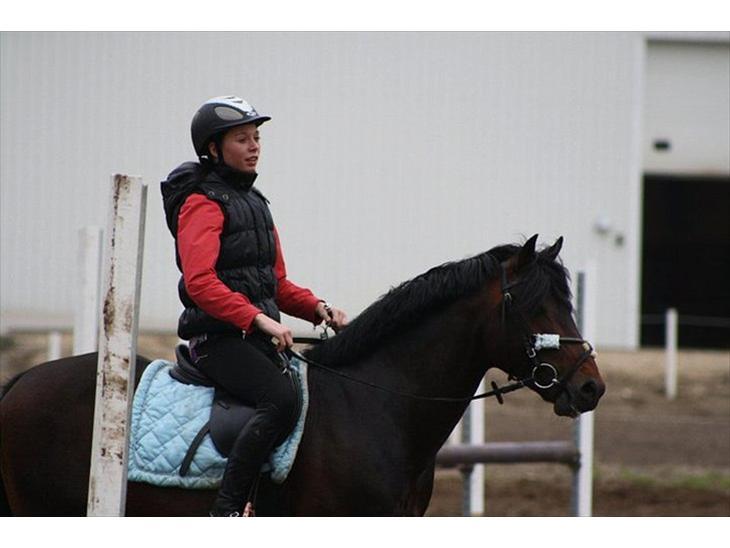 New Forest Stackarps Pablo -  springundervisning på morsø rideklub d. 18 maj