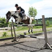 Anden særlig race Rain Solei - B-pony