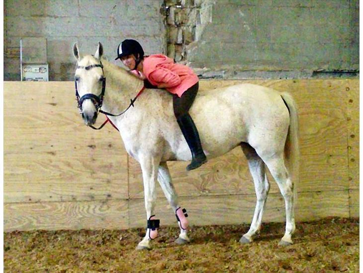 Anglo Araber (AA) Rolighedens Zorba<3 - Velkommen til Zorba pigens profil<3 Lig gerne en kommentar og en bedømmelse af den dejlige hest :-D
