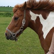 Anden særlig race Flamme *.. Bølle pony!<3 (Solgt) ;'(<3