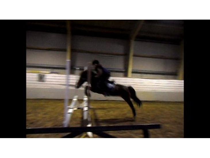 Exmoor Mathilde - Springtræning :-)