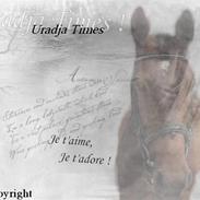Hollandsk Varmblod Uradja Times-Radja † (07)