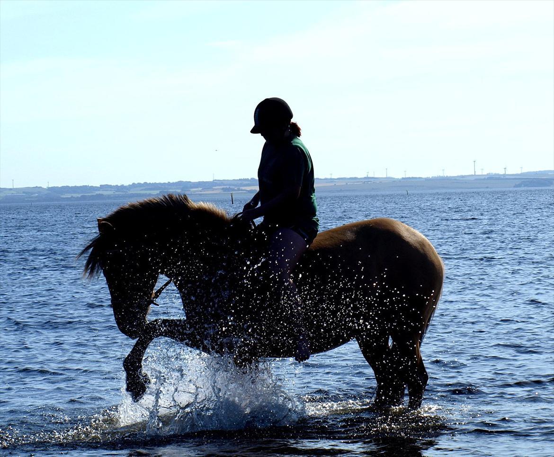 Anden særlig race Fjordsteds Tupsi - solgt d. 21/5 2014 - Ved stranden d. 29. juli |  © Maja Wittendorff billede 1