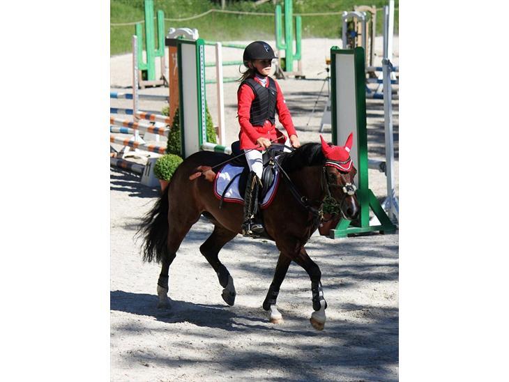 Welsh Pony af Cob-type (sec C) Åvangens Victoria - Velkommen til Victoria's profil læg gerne en kommentar+bedømmelsemed på vejen.. Her på vej ud af banen:-) Foto: KrS-Photo