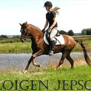 Welsh Pony (sec B) Cloigen Jepson