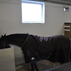 DSP Bjirmen´s Maryse [Min egen pony<3]
