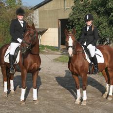 Welsh Pony af Cob-type (sec C) Gribsvads Lady Dee<3 snusken<3<3