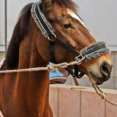 Anden særlig race Mirou ~ Min smukke dreng <3