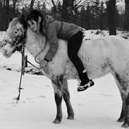 Hollandsk Sportspony Tiger - My soulmate<3 (Snoopy)