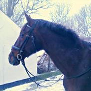 Oldenborg Mille (Camilla Mellergård)  [Låne hest]