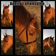 Anden særlig race Adeilo *R.I.P*