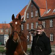Dansk Varmblod Trehøjgårds Samson