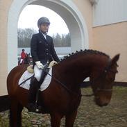 Tysk Sportspony Limbo spirit (gammel part)