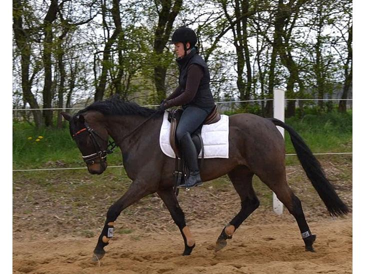Anden særlig race ELMEGAARDENS ASTERIX - Meget koncentreret begge to :-) 25.04.2012