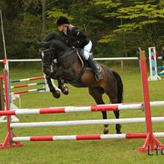 Welsh Cob (sec D) TECNO the WINNER