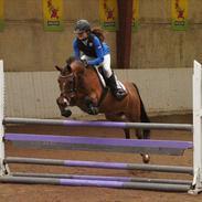 DSP Vestegaard Malifie B-pony