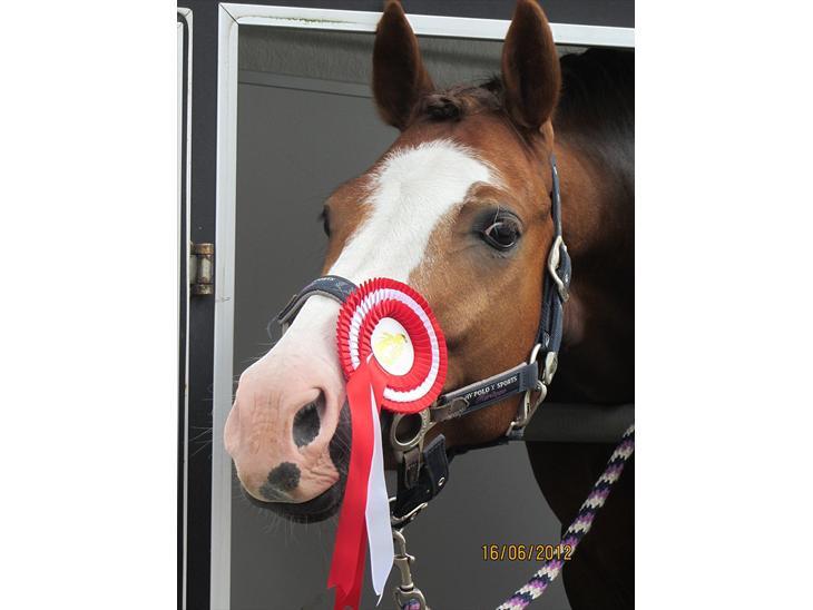 DSP Bæklunds Cecchetti - Vores første stævne, hvor vi fik en 1. plads med 65% i Lc1! Stjerne pony!!!♥♥♥
