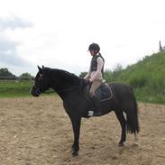 Anden særlig race Nygaards Beckham (min søsters pony)