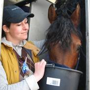 New Forest Horsemosens Navarone