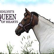 Pinto Rosenlyst's Queen og heart's(tidl. låne)