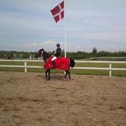 Hollandsk Sportspony Obelix