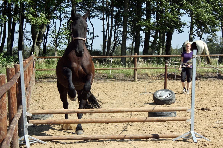 Frieser Roose - 24 Juli 2012 - Første gang Roose løsspringer. billede 15