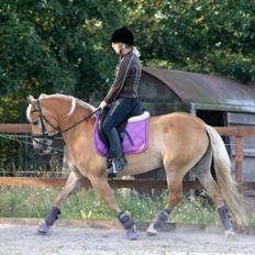 Haflinger My Fair Lady.SAVNET ;(
