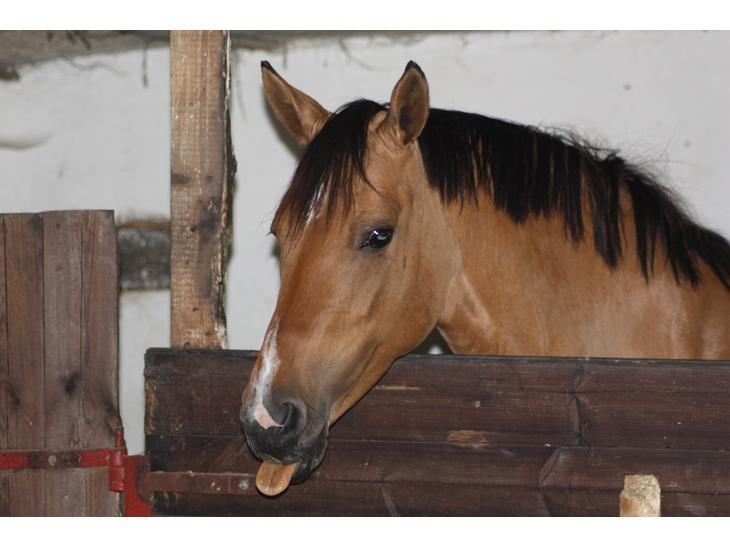 Anden særlig race Hedegårens Bella Bacardi (B-pony) - Velkommen til bellas profil!<3
