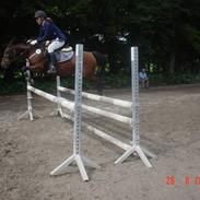 Hollandsk Sportspony Domenique<3 B-pony Soulmate