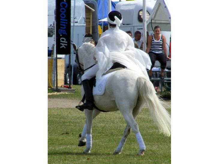 Welsh Pony (sec B) Bjerregårds Montbars(RIP) - opvisning på landsskuet 2008 (the national show) billede taget af Camilla Vestergaard