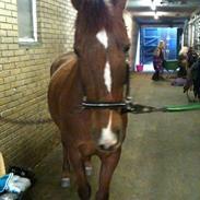 Anden særlig race Malou<33 ->Vores pony<-