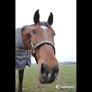 Anden særlig race Cavallo<3