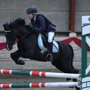 Welsh Pony af Cob-type (sec C) Little luke (The best<3)