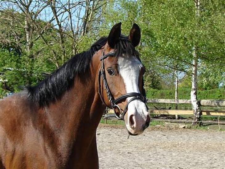Anden særlig race      Pareille Pal - pareille er en virkelig dejlig pony, med nogle enestående gangarter... savner dig<3