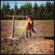 Anden særlig race Aladah Super Mule (Musse)<3
